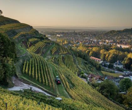 Vigne Domaines Schlumberger Alsace@Vincent Schneider