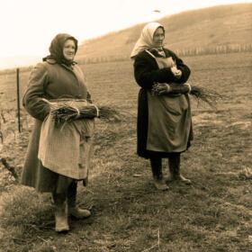 Histoire vigne Liage Domaines Schlumberger Alsace