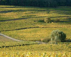 Vigne Grand cru Spiegel Schlumberger Alsace