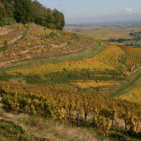Vigne Grand Cru Kitterle Domaines Schlumberger Alsace