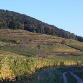 Vigne Domaines Schlumberger Alsace