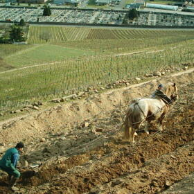 Vigne Chevaux Domaines Schlumberger Asace
