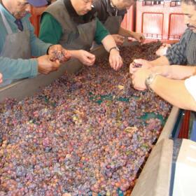 Cave vendange Schlumberger vin Alsace